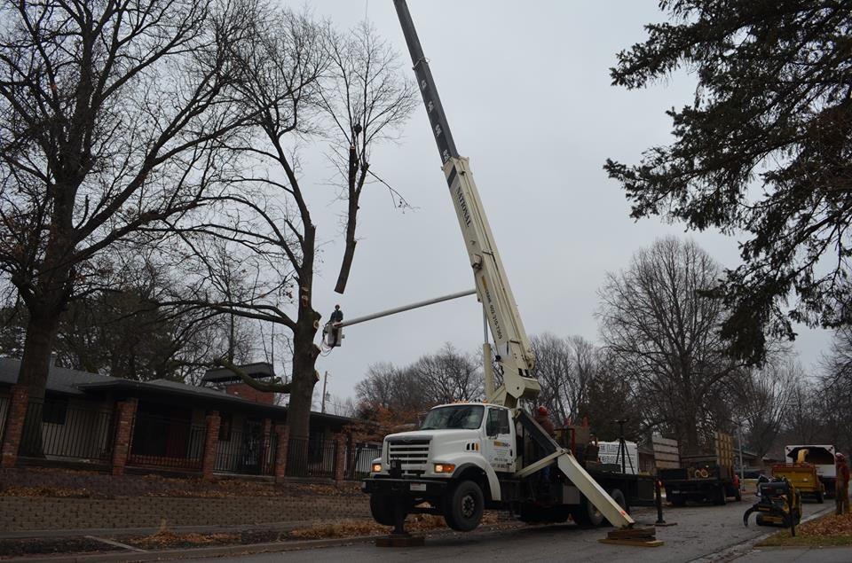 Best Tree Service In Lincoln Nebraska 8.jpg