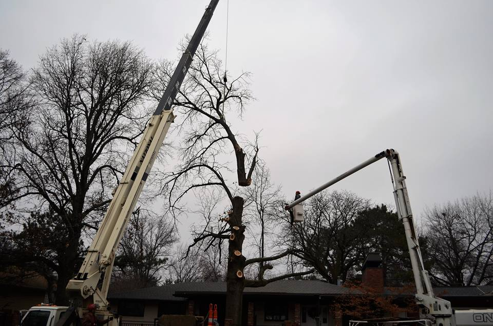 Best Tree Service In Lincoln Nebraska 11.jpg