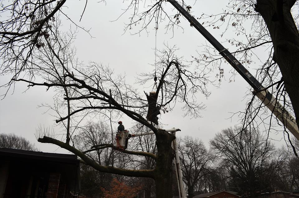 Best Tree Service In Lincoln Nebraska 12.jpg