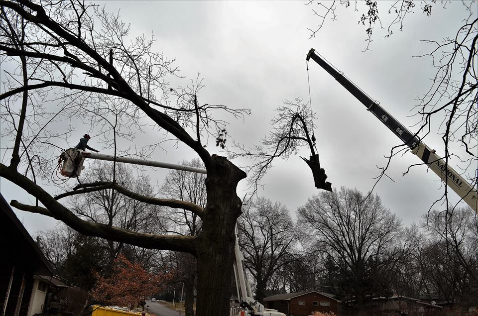 Best Tree Service In Lincoln Nebraska 13.jpg