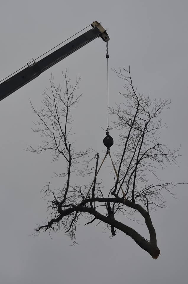 Best Tree Service In Lincoln Nebraska 15.jpg