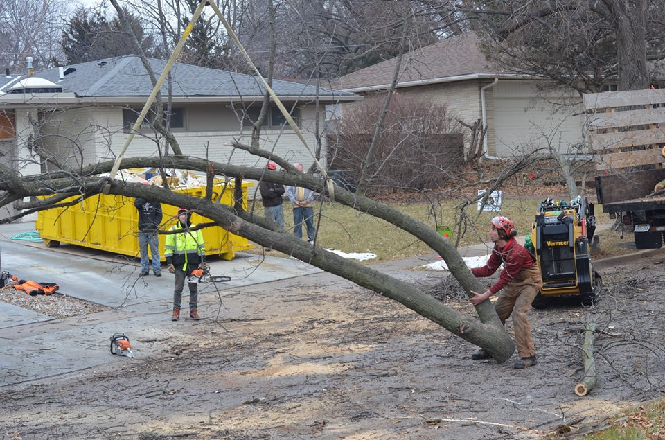 Best Tree Service In Lincoln Nebraska 16.jpg