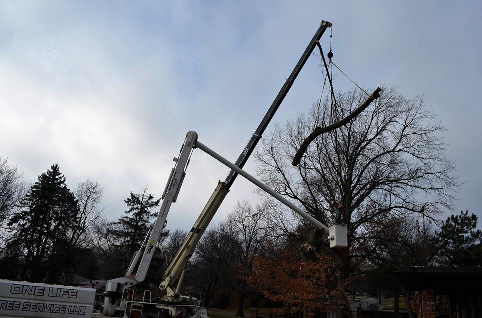 Best Tree Service In Lincoln Nebraska 22.jpg