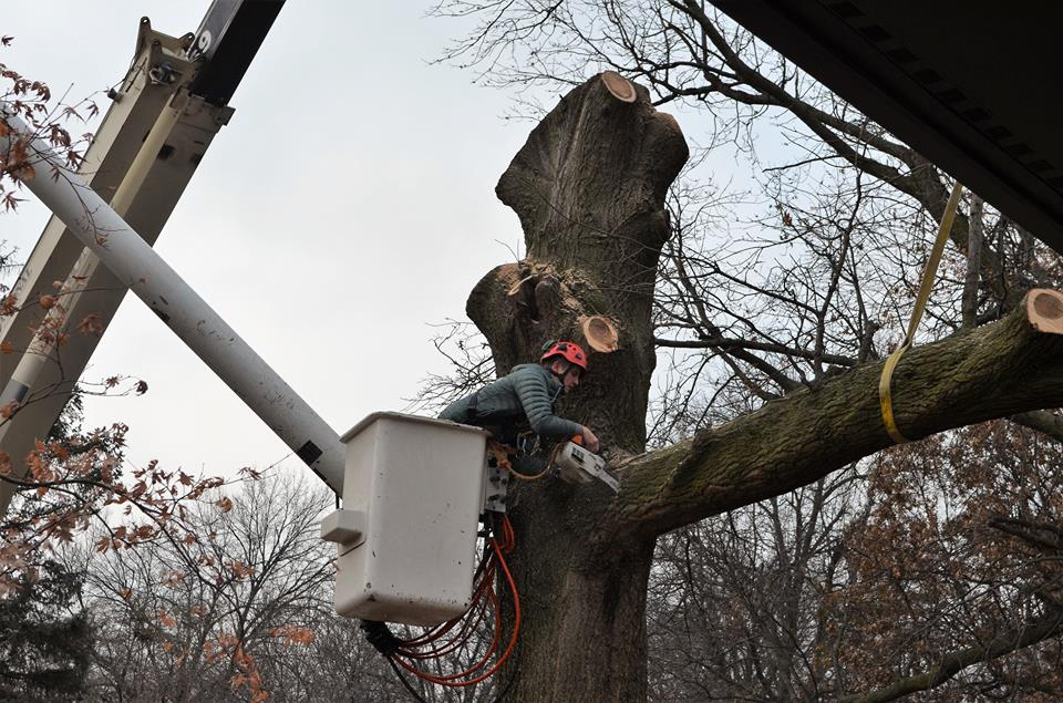Best Tree Service In Lincoln Nebraska 21.jpg