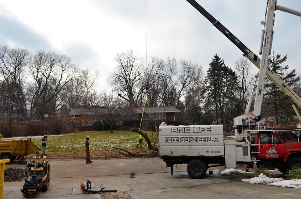 Best Tree Service In Lincoln Nebraska 23.jpg