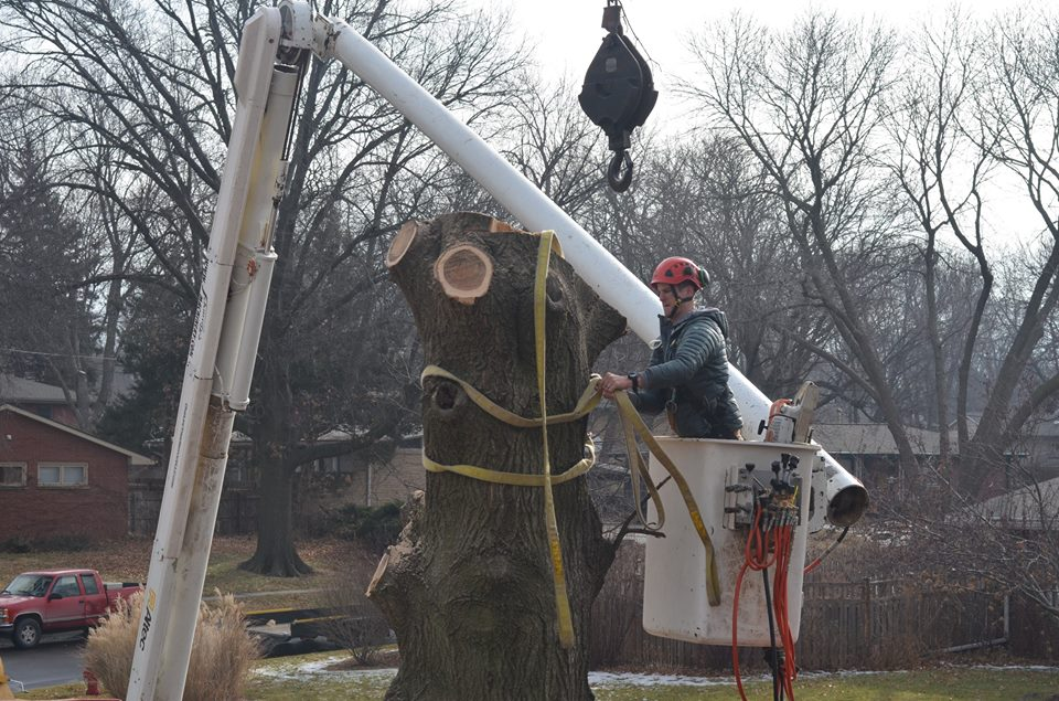Best Tree Service In Lincoln Nebraska 24.jpg
