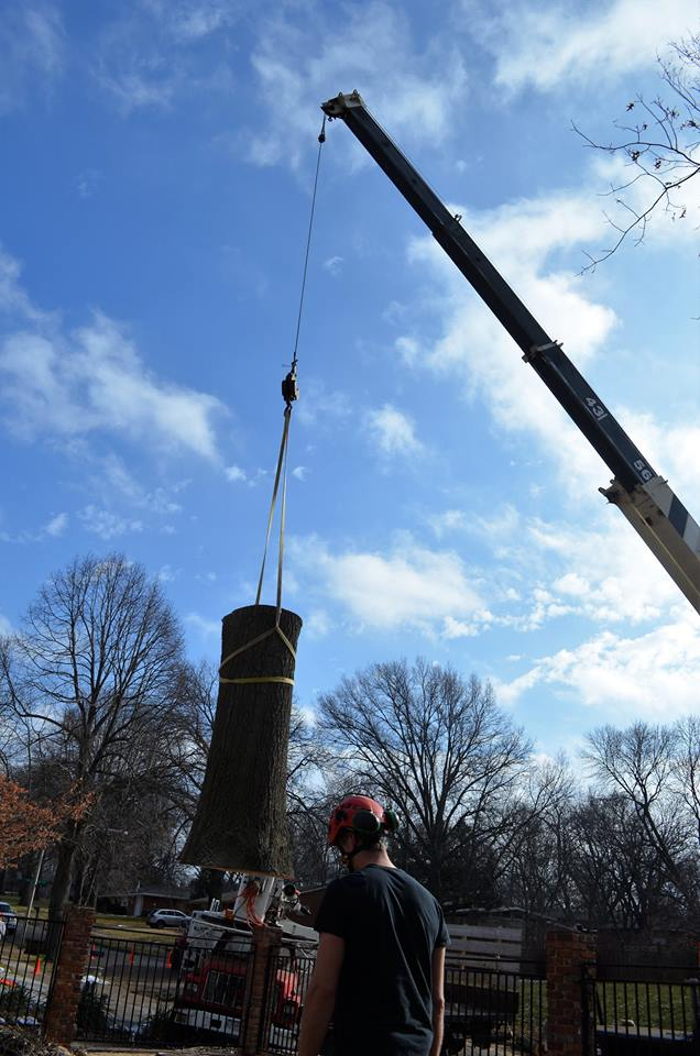 Best Tree Service In Lincoln Nebraska 32.jpg