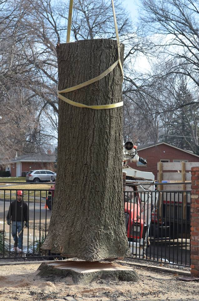 Best Tree Service In Lincoln Nebraska 31.jpg