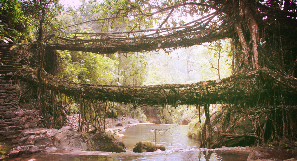 double-decker-root-bridge