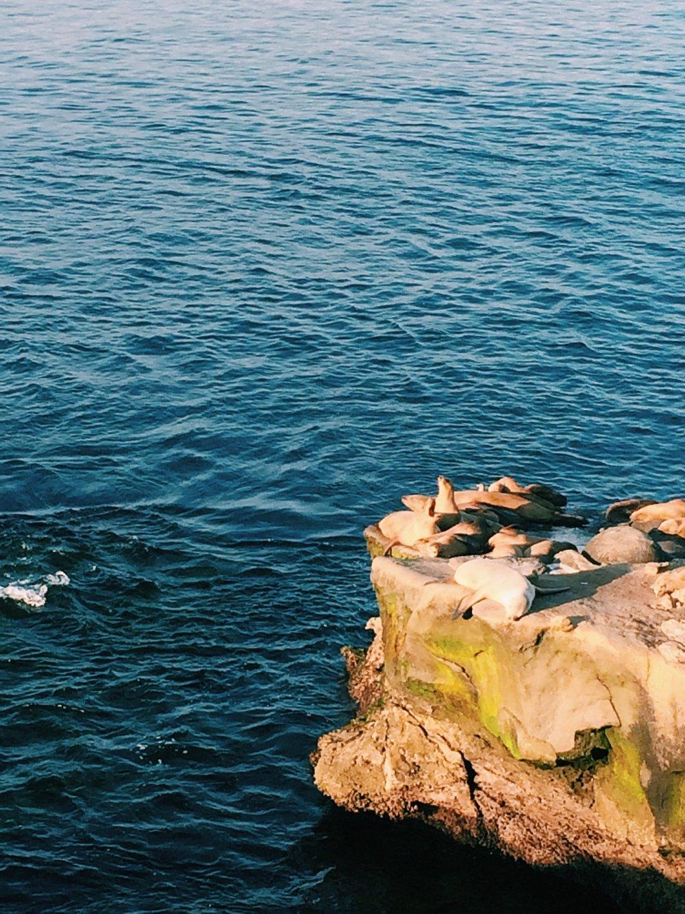 More sea dogs.