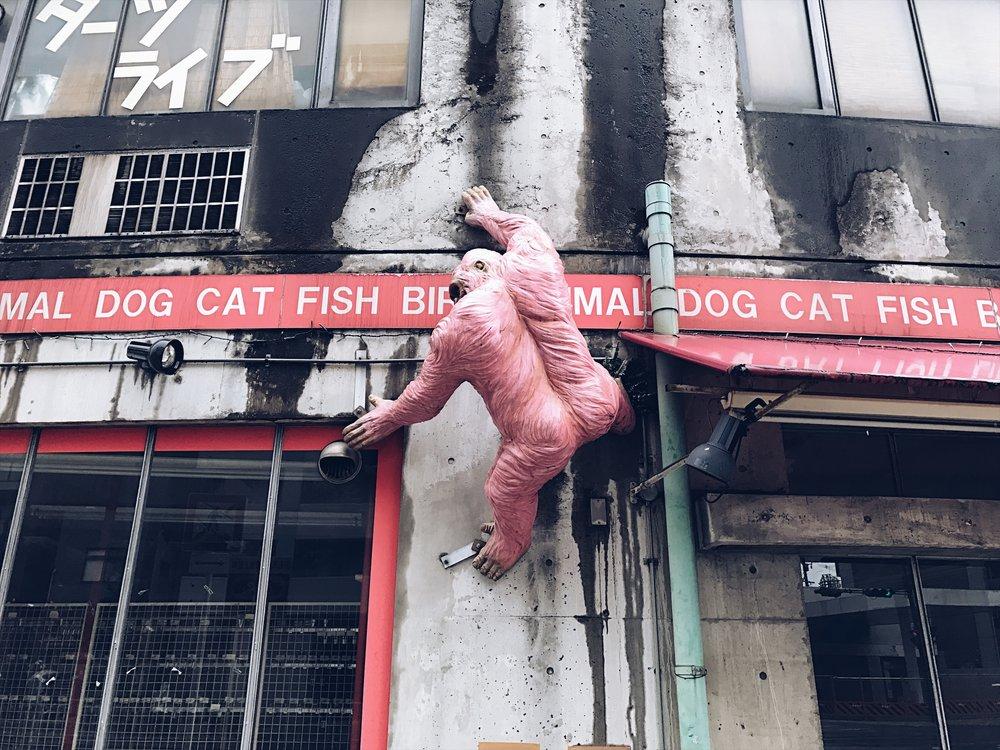 Pink ape !