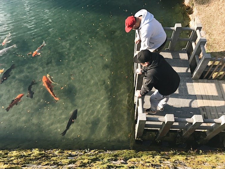 They say you gotta feed the Koi fish for good luck in Japan.
