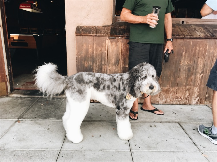 This dog look fake as fuck! Lol