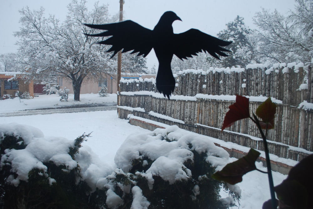 Raven Silhouette_ Cooper Lee Bombardier.jpg