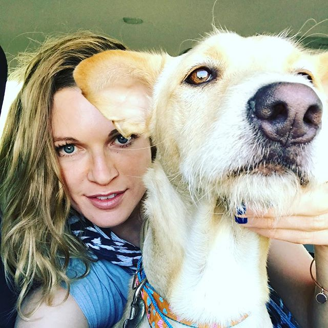 He made it !!! Just picked up this handsome rescue at SanFran airport..... he flew in all the way from Bangkok !!! Such an honor ! Thank you for saving him and making it possible Joy Huss and team!!! Welcome, buddy , your an American now and safe at blossom animal rescue in just few hours ! #thaidog #rescue #longjourney #firstselfie 🐾in America.
