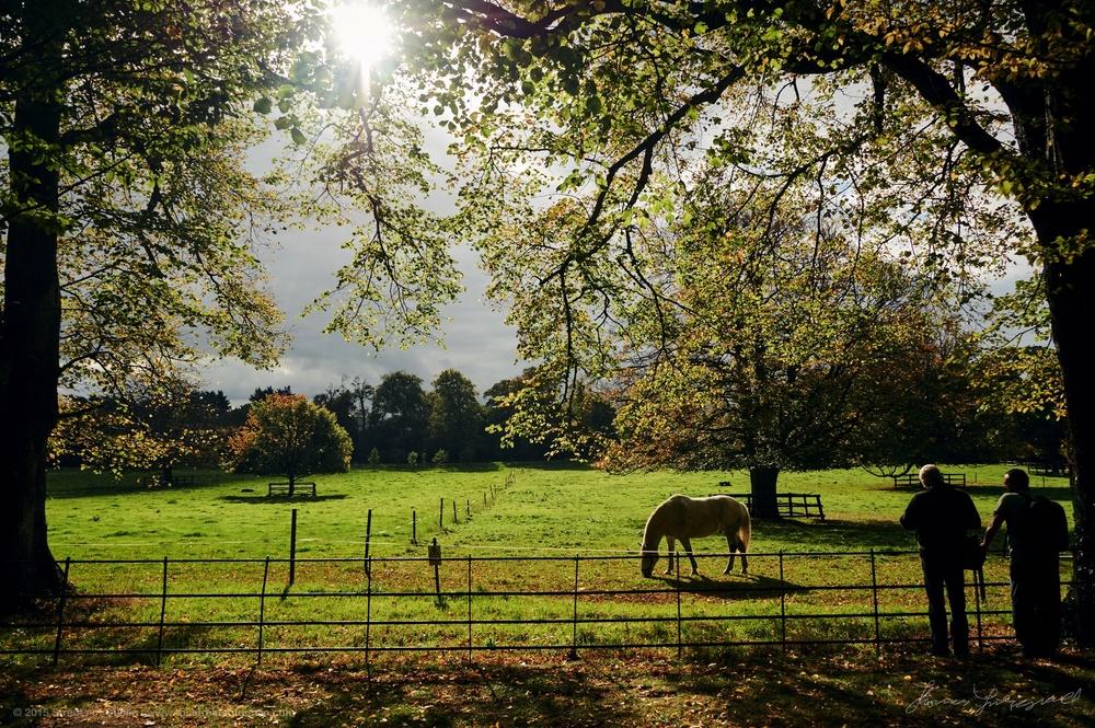 Horses-in-pheonix-park-wmk.jpg