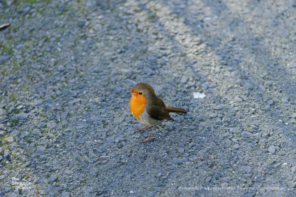 Streets-of-Dublin-Photo-1223.jpg