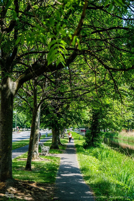Canal Bank Walk