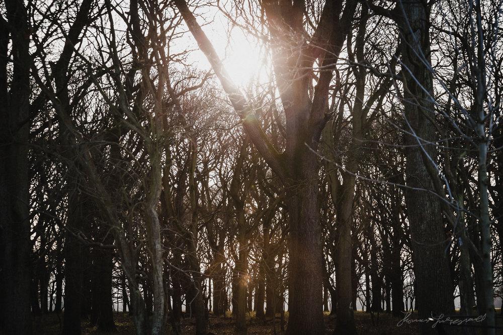 Winter Sunshine in the Phoenix Park in Dublin