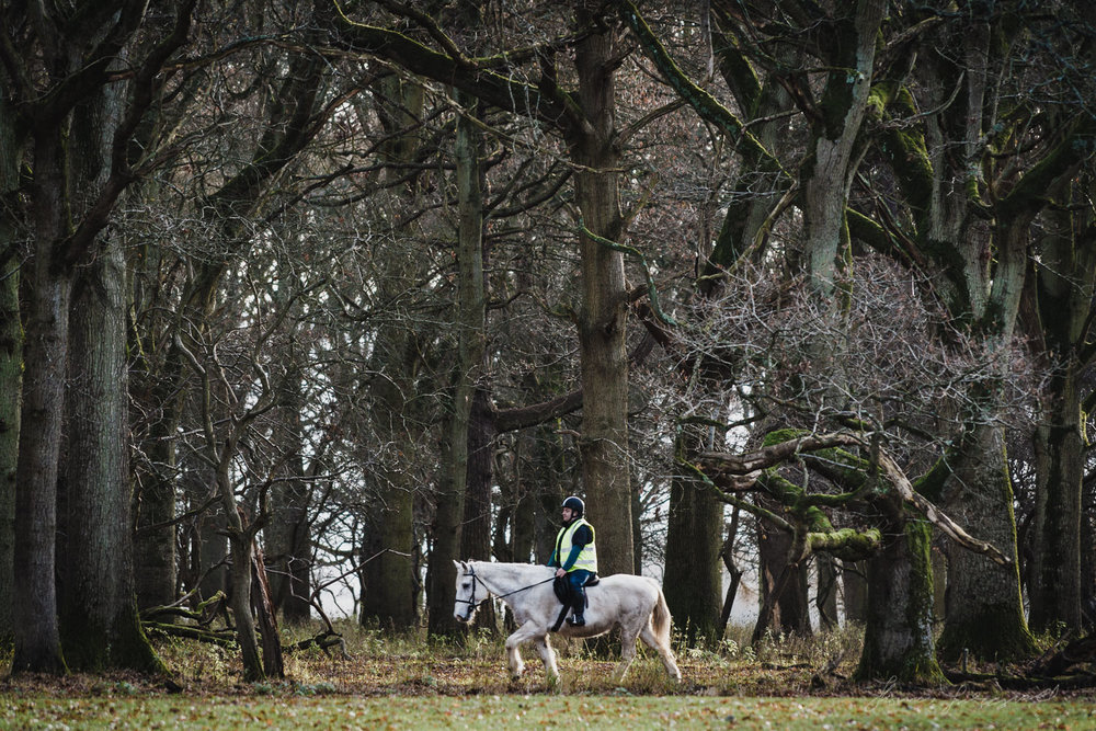 A Man riding a horse in the Phoenix Park in Dublin