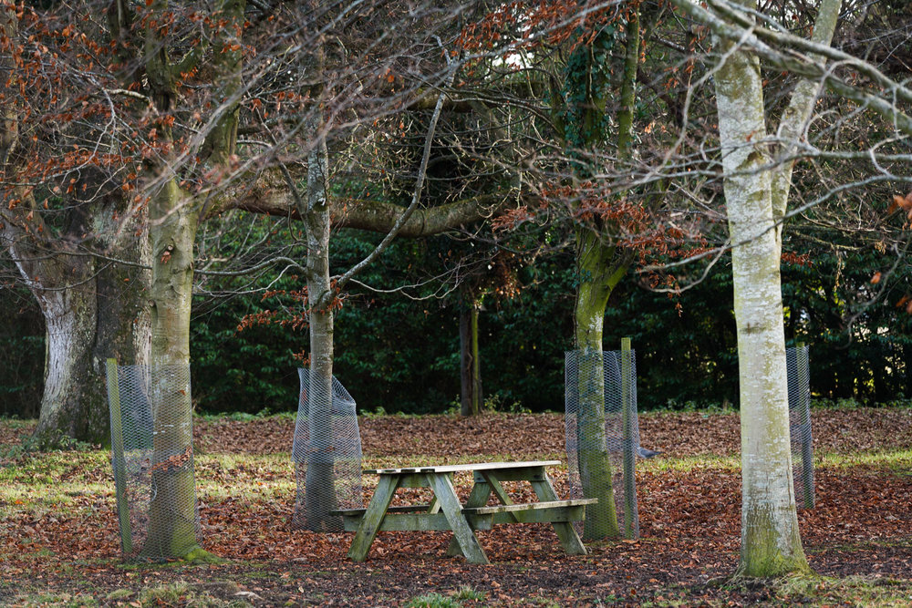 A Picnic Table in the Phoenix Park in Dublin