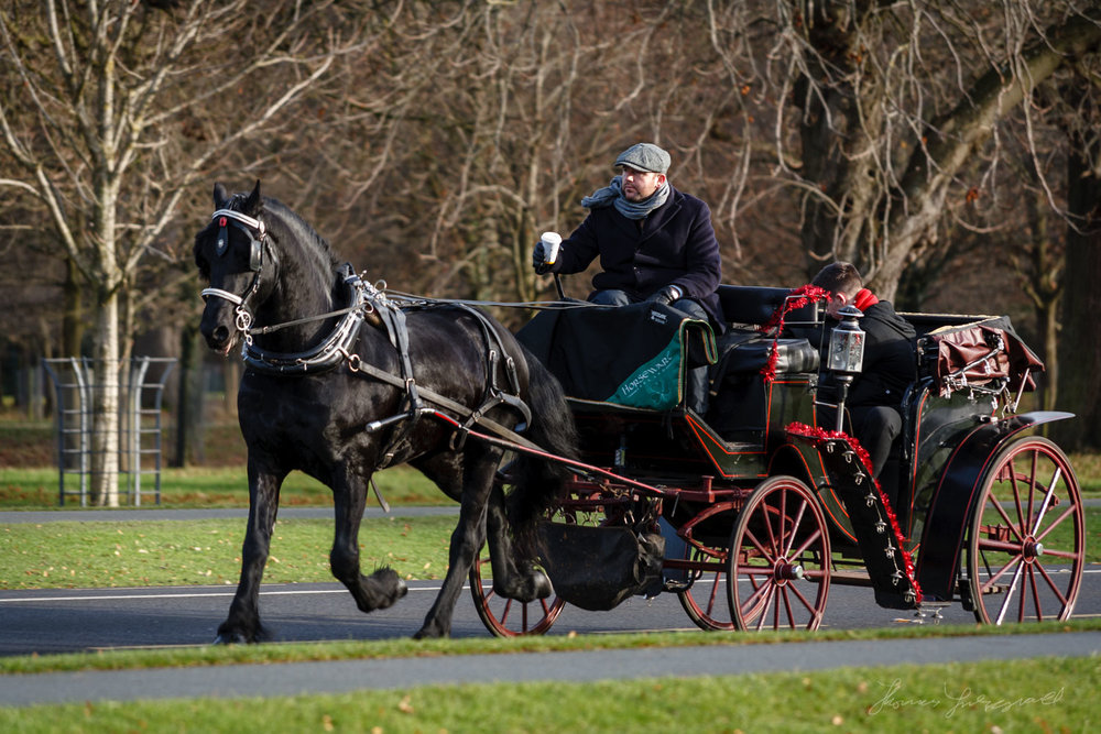A Horse and Carriage ride in the Phoenix Park in Dublin