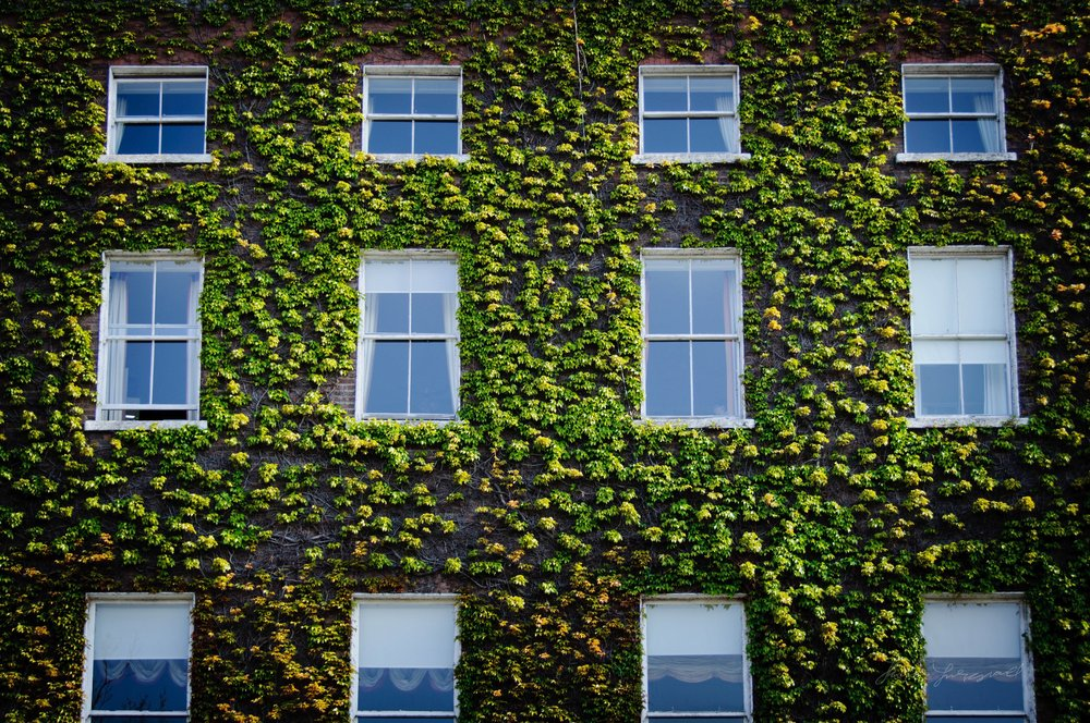 An old georgian building on Stephen's Green in Dublin, covered with Ivy.