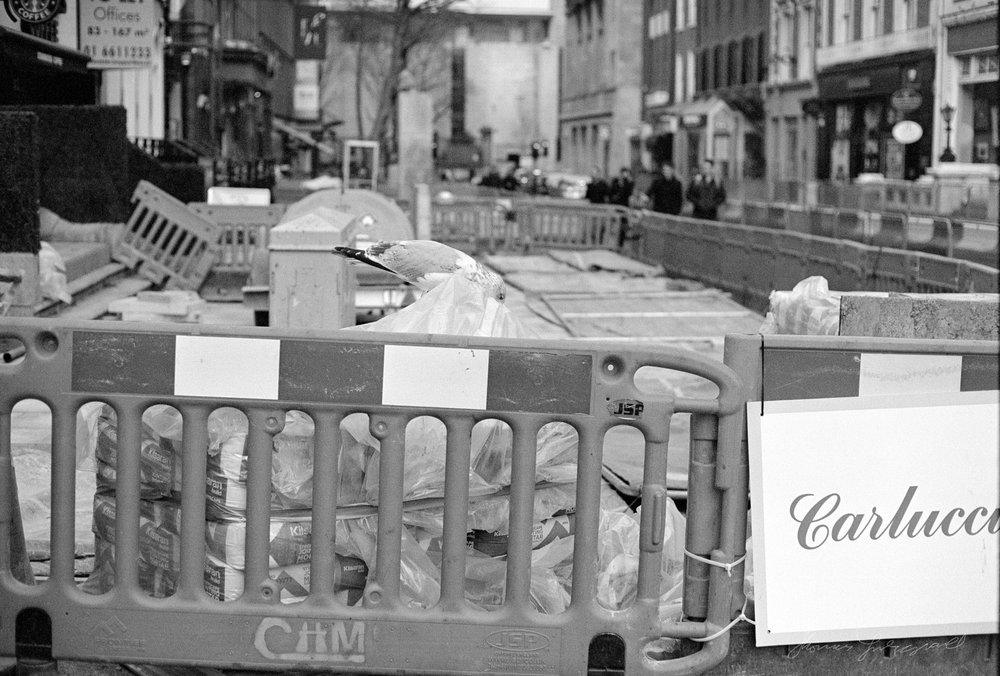 A Bird pecking at Building Materials  - Dublin on Film - The Streets of Dublin