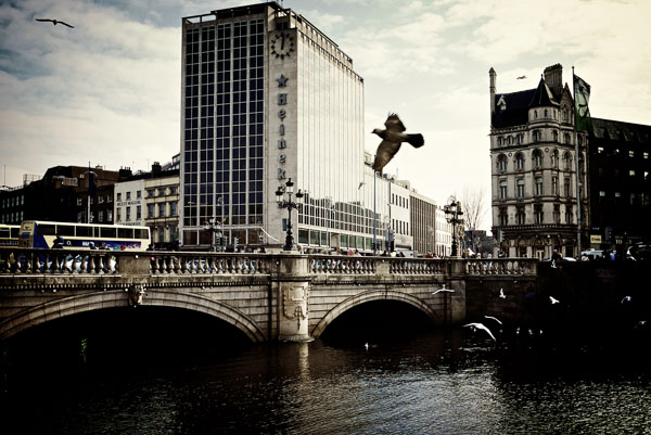 A Bird flies in front of O'Connell Bridge