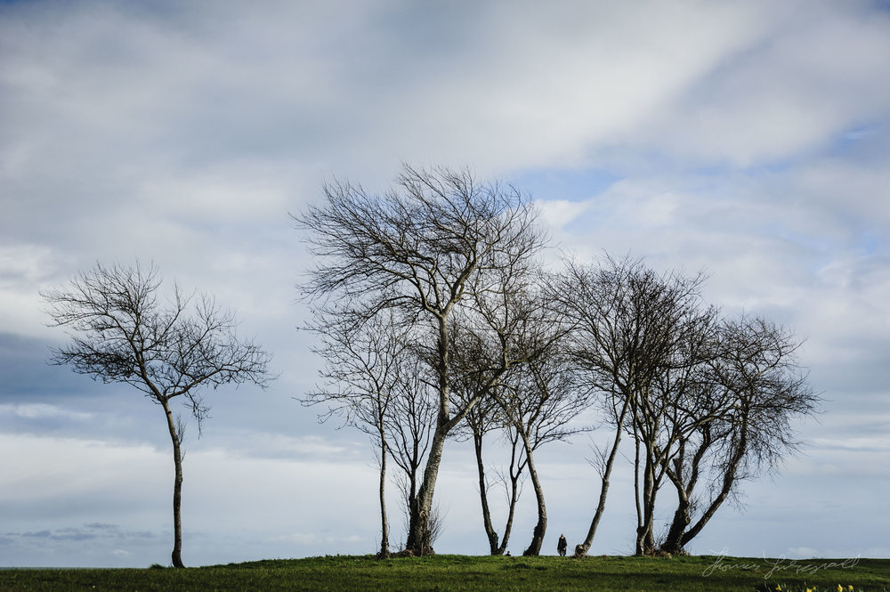 Tree lined hills in malahide