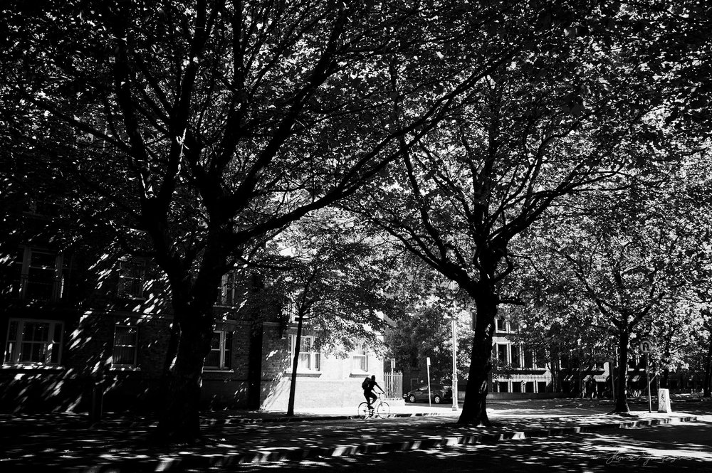 Through the Trees - The Streets of Dublin