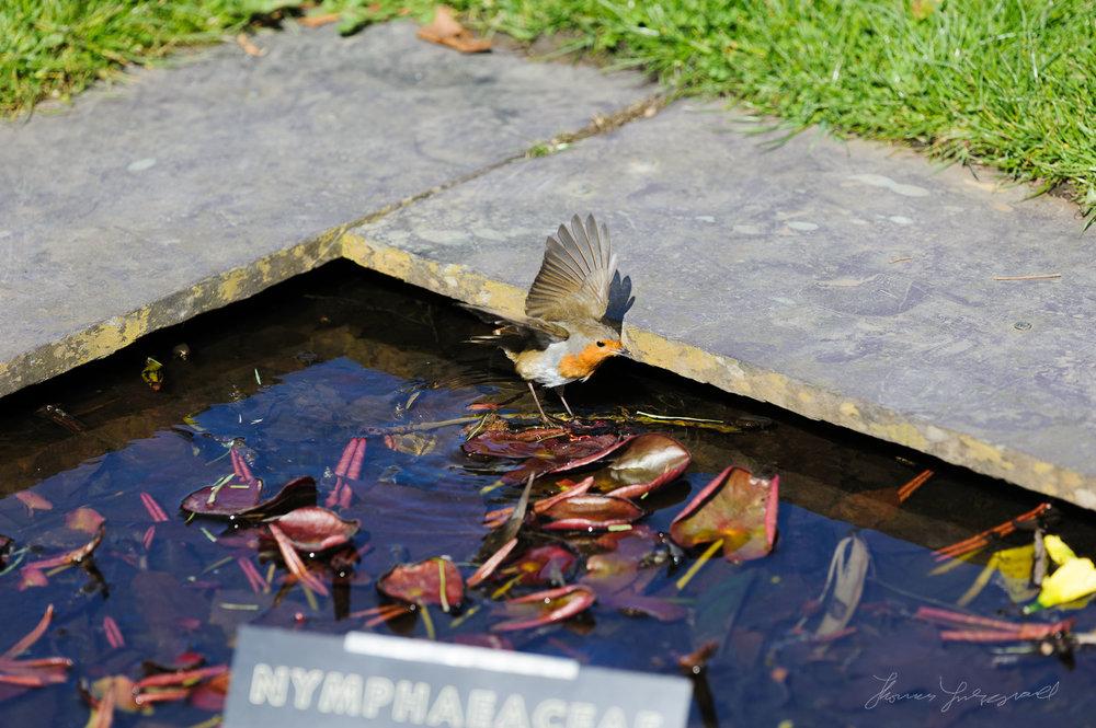 Botanic Gardens, Dublin