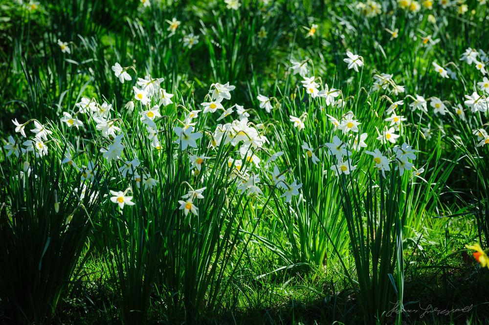 Spring Flowers in the Botanic Gardens