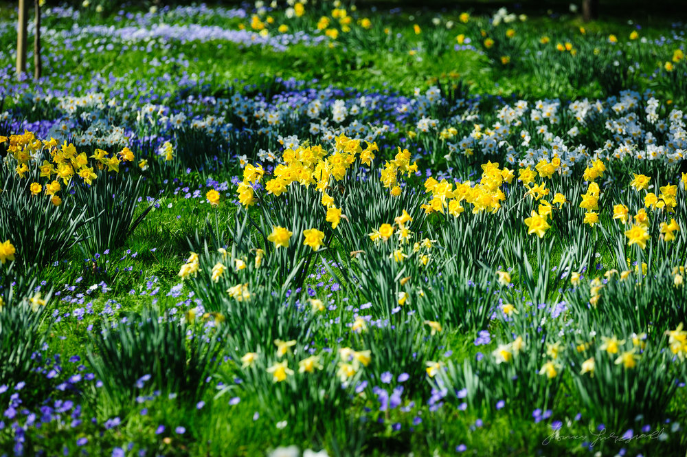 Spring Flowers in the Botanic Gardens