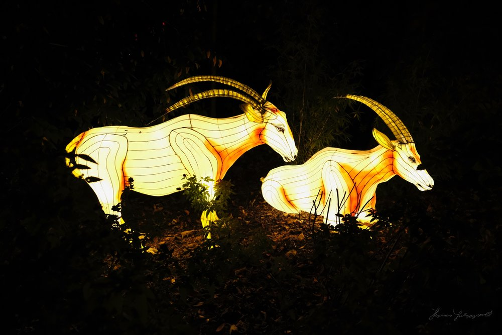 Wild-Lights-Dublin-Zoo-002_001.jpg