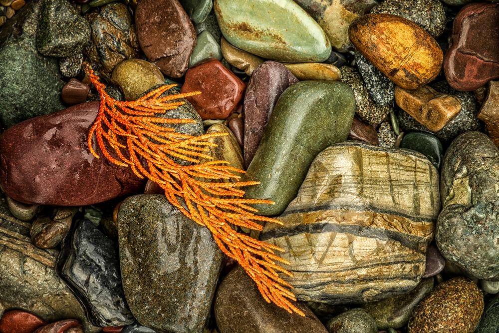 Fallen on the Rocks