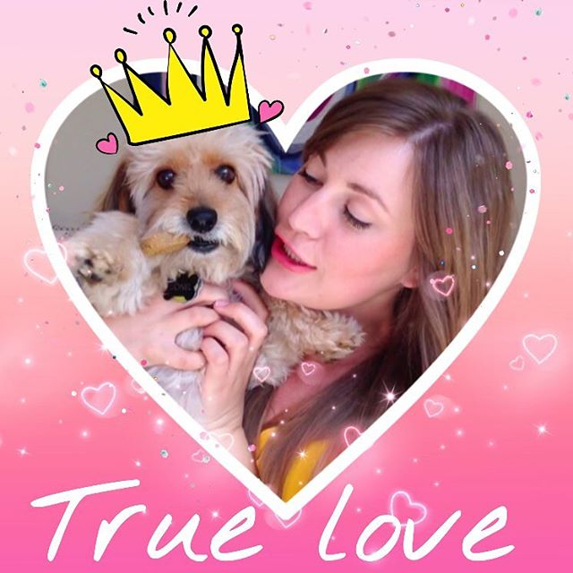 Happy Valentine's Day to the only man who ever loved me! 💋👑 My boo #PrinceHarry xoxo luv u 4 eva! 🐾💝 • • • • • #happyvalentinesday #puppylove #doxiepoo #dogs #valentine #bemine #sweet #comedy #truelove #poodle #love #bae #prince #webseries #film #girlpower #galentinesday #valentinesday #heart #boo #instadog #dogsofinstagram #dog #puppy #dachshund #poodle #hearts