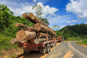 District-Tawau_Sabah_Logging-Trucks-01.jpg
