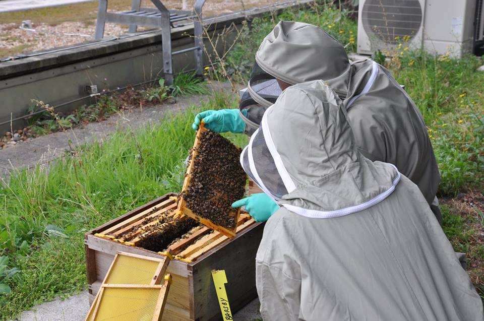 Our beekeeper Graham and trainee beekeeper Annette (At-Bristol staff member) on the At-Bristol roof tending to their bees