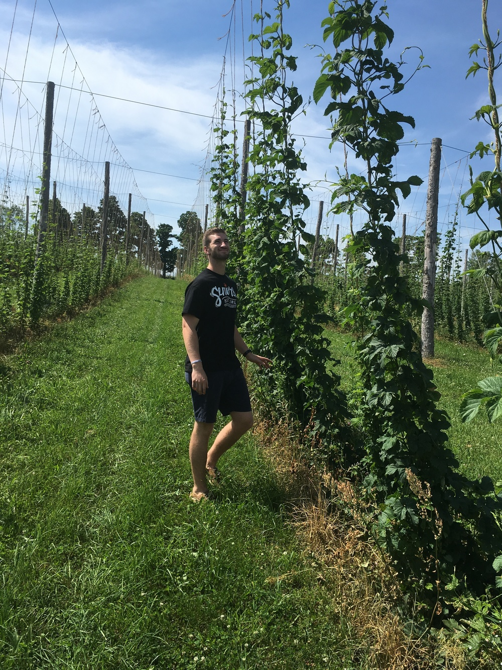 "This young Hop Master is 6'5""  to put into perspective the height of the healthy bines.  June 2016"