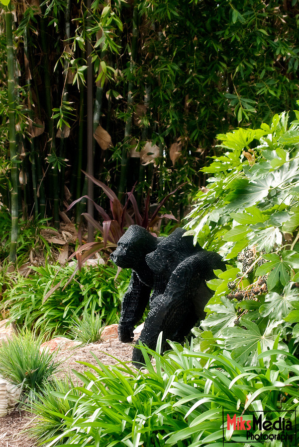 Gorillas in the forest