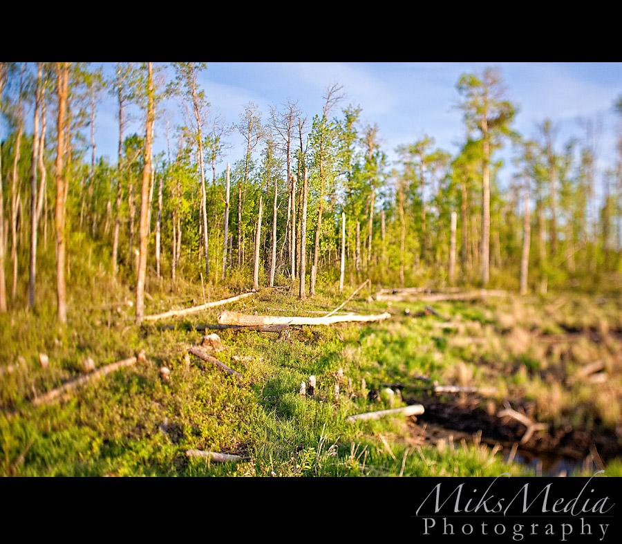 Beaver Woods
