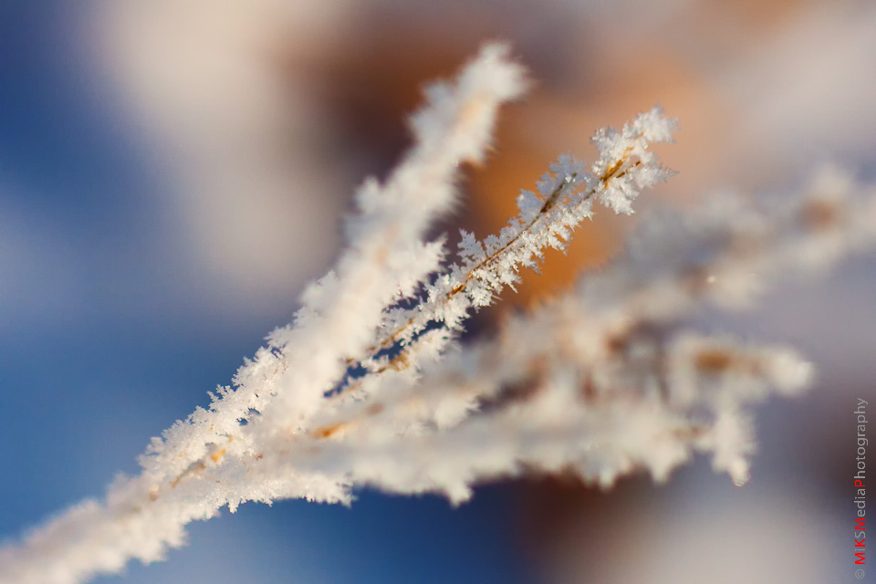 Touch of a frost..