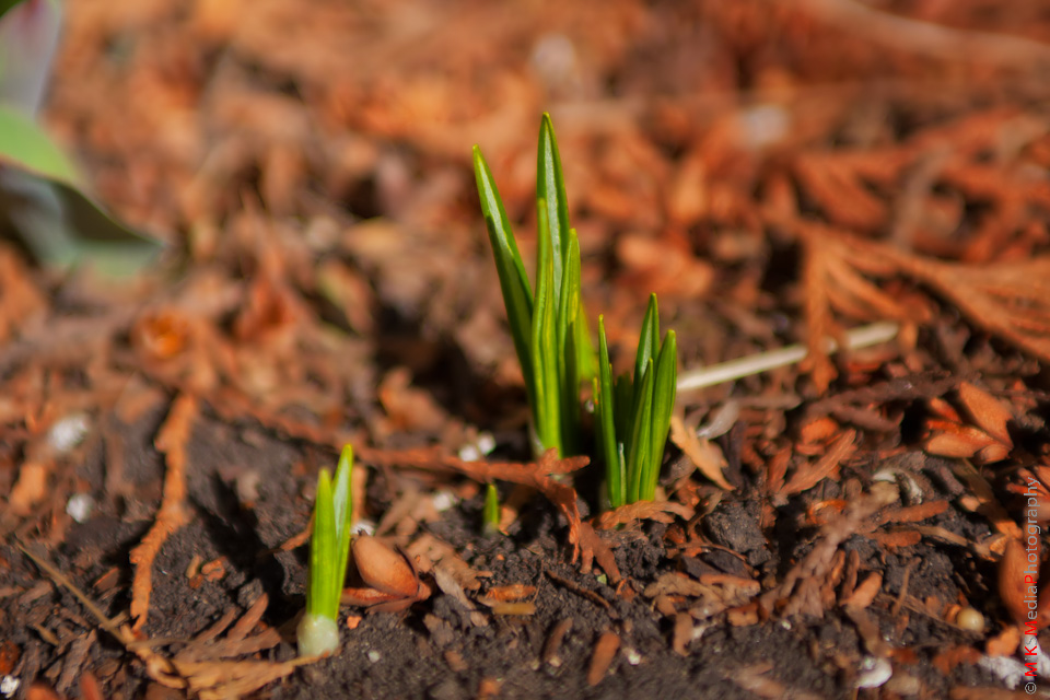 Third sign of spring 5