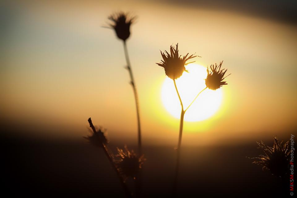 xpro-sunset-3