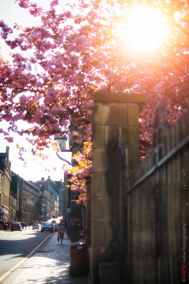 bloom street sun edinburgh
