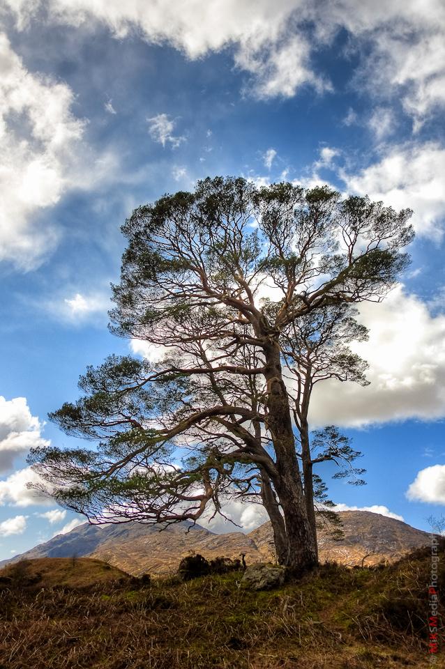 glenfinnan pine tree lake