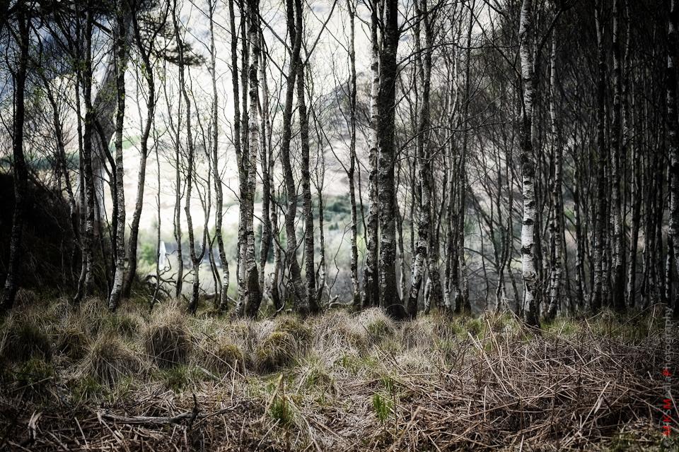 marsh trees scotland landscape