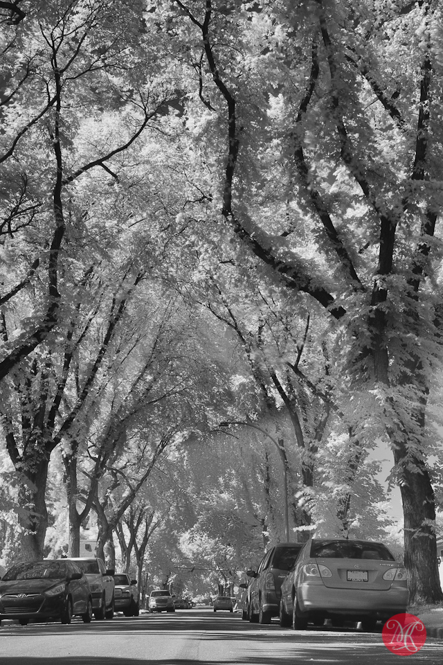 street photography infrared edmonton