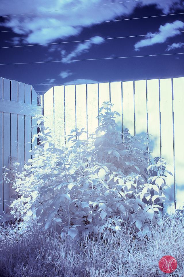 infrared fuji xpro1 photographer edmonton